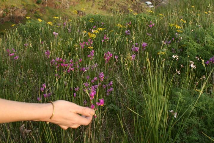 jen, wildflowers